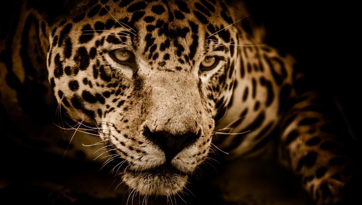 Woman attacked by a jaguar while taking selfie questions the zoo's security