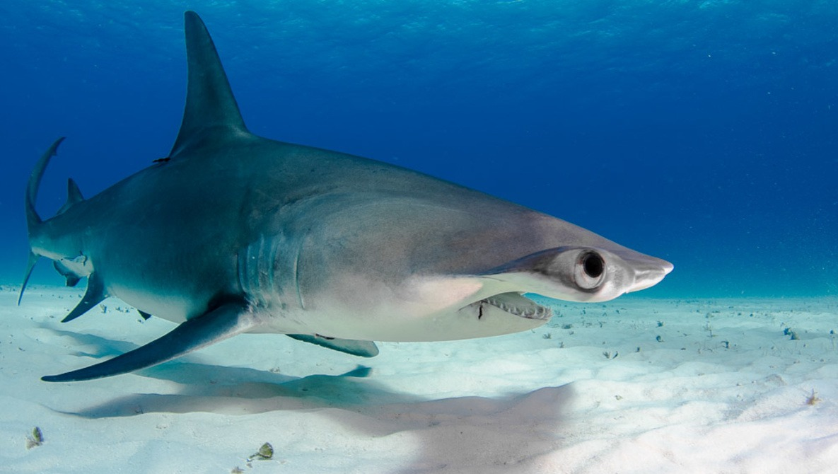 6 Tips for Photographing Sharks Safely