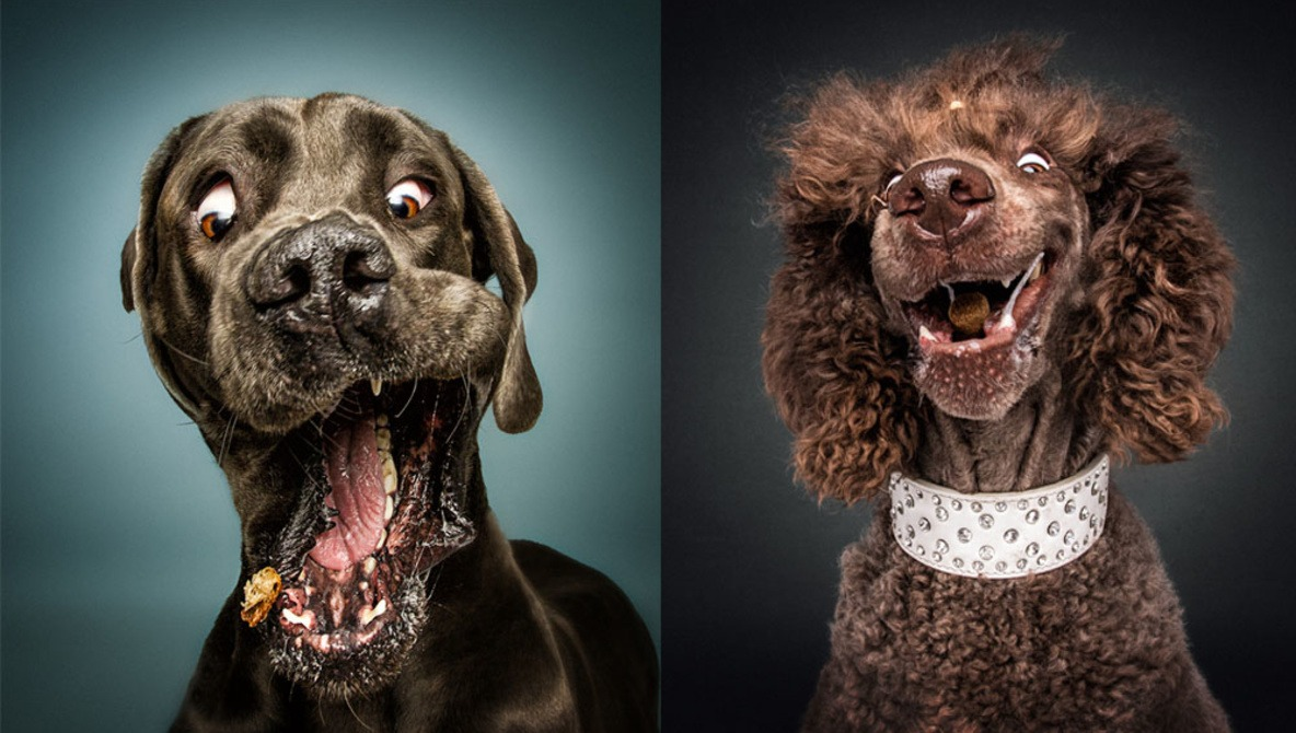 Hilarious Portrait Series Captures Dogs Reacting to Treats Being Thrown at Them