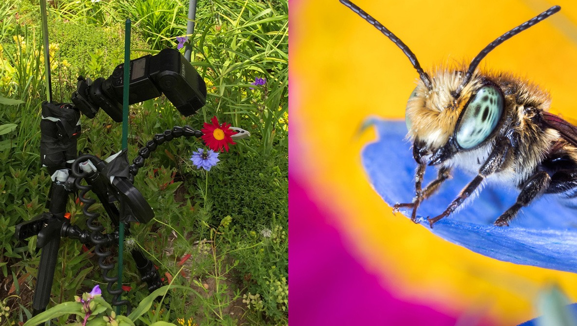 The Macro Photography Rule Book: Think Differently