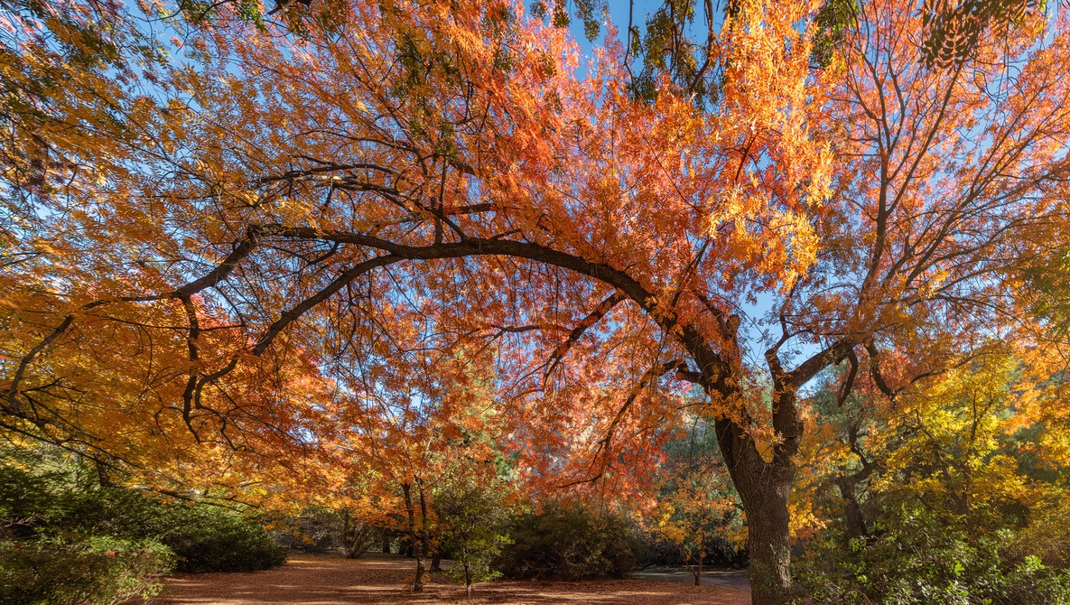 Want to Shoot Fall Colors? Use These Guides to Pick the Perfect Time