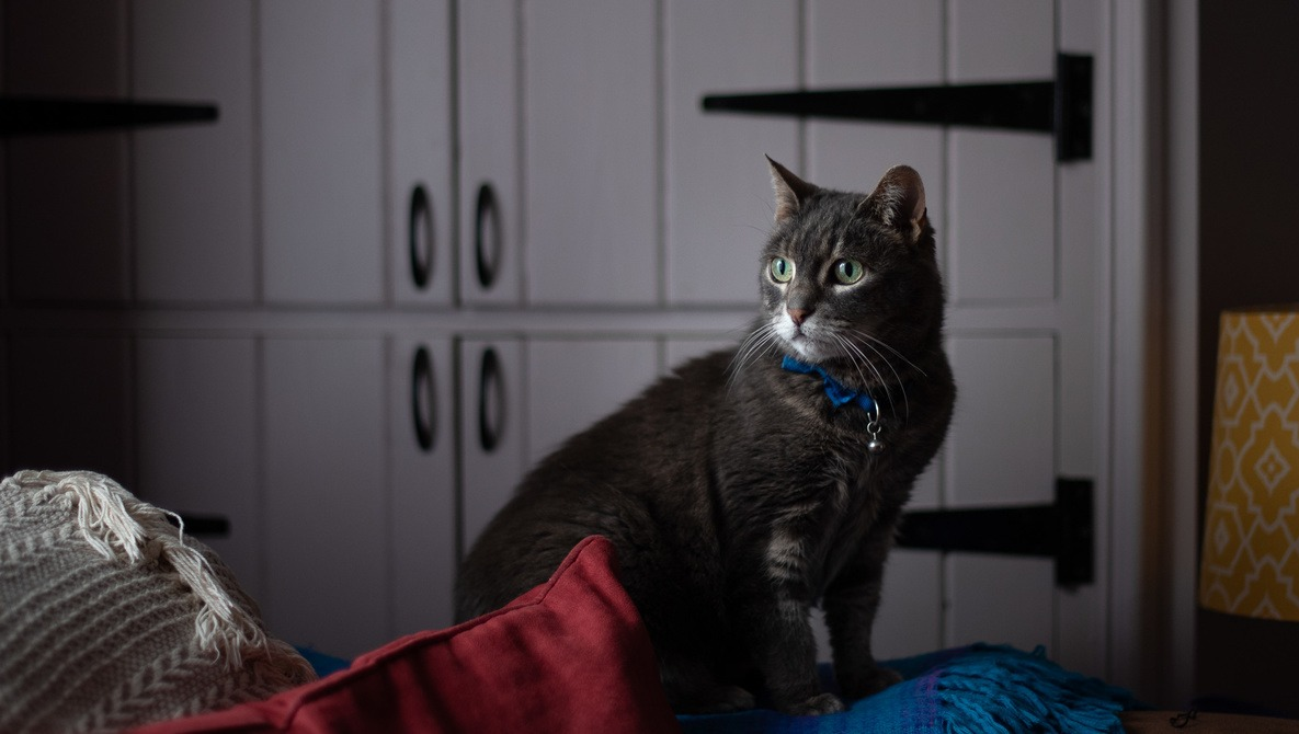 How to Take Stunning Pet Portraits at Home