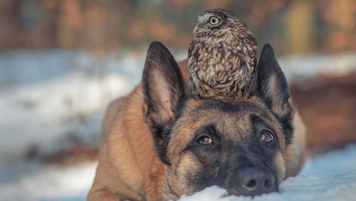 The Incredible Photo Series Documenting the Unlikely Friendship Between a Dog and an Owl