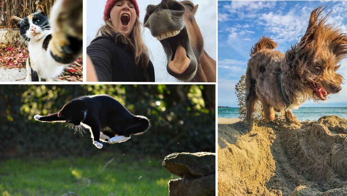 Want to Win $3,700? Just Take an Image of a Pet, Any Pet.