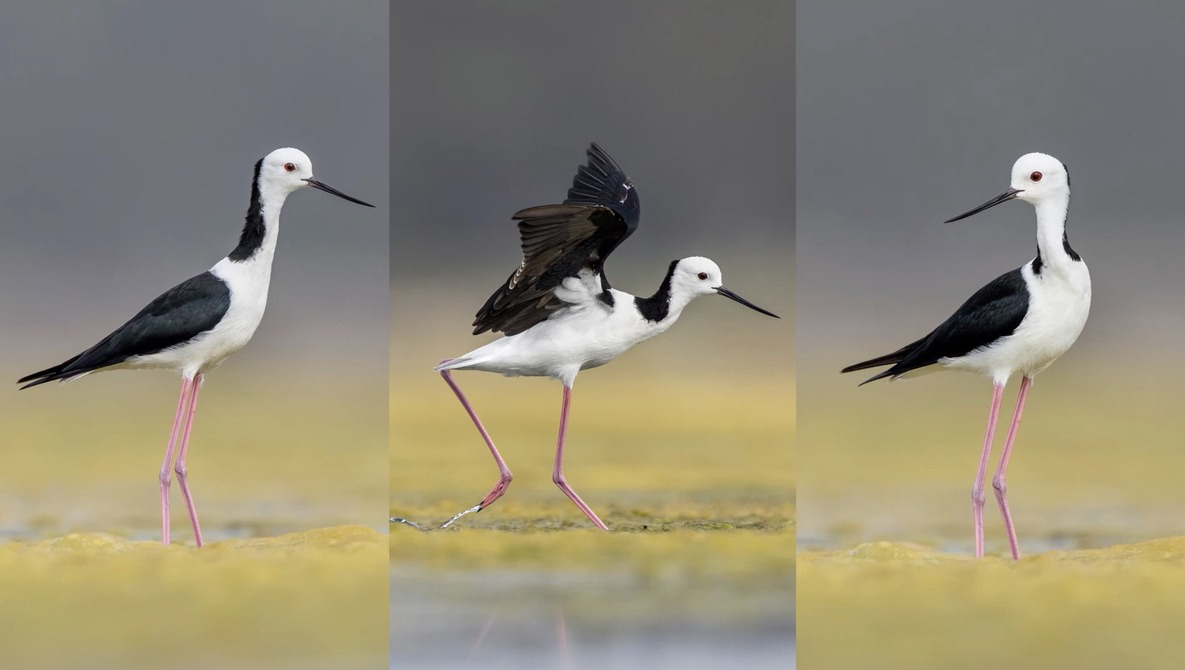 Capturing the Best Poses for Bird Photography