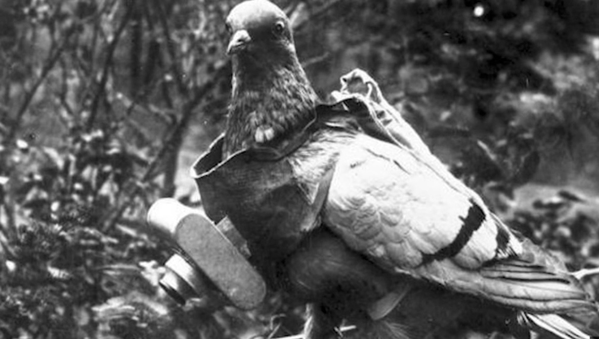 The CIA Attached Cameras To Pigeons To Spy On Enemies During the Cold War | Fstoppers