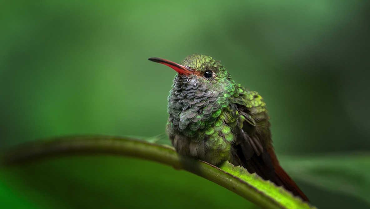 8 Helpful Tips for Photographing Hummingbirds