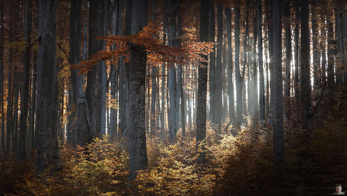 10 Helpful Tips for Photographing Trees