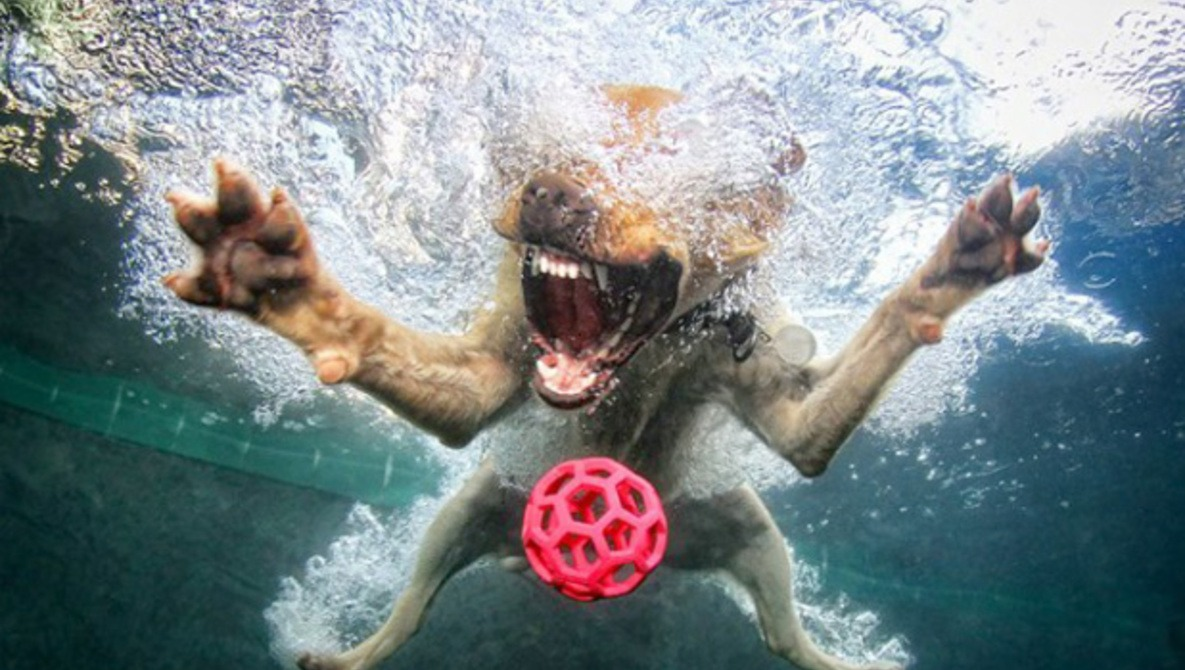 [Pics] Stop What You're Doing And Look At Dogs Underwater