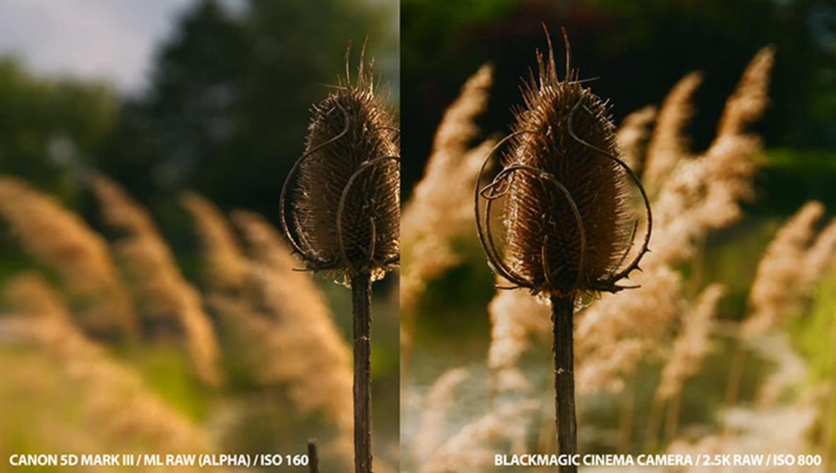 Raw Comparison: Magic Lantern Canon 5D VS Black Magic Cinema Camera