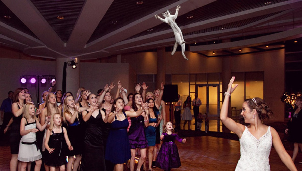 Brides Throwing Cats Instead Of The Bouquet of Flowers