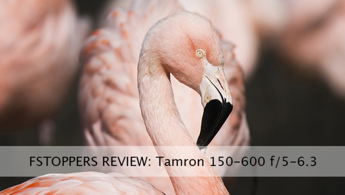 Field Testing Tamron's 150-600mm f/5 0-6 3 Proves a Positive