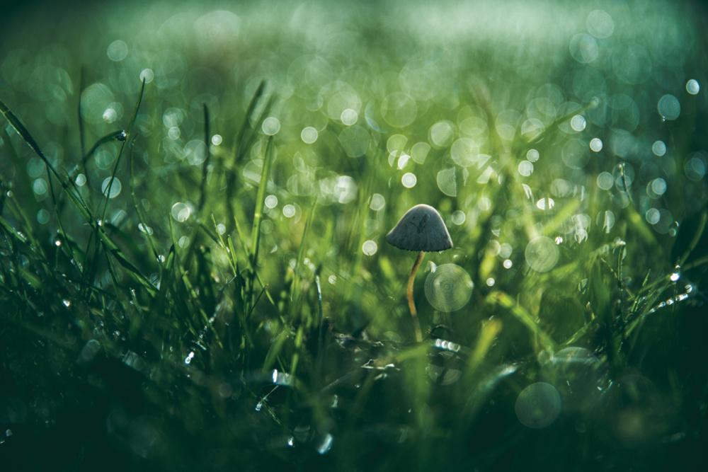 Morning Dew Plus Grass Equals Great Bokeh