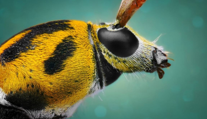 Incredible Macro Photographs Showcase the Unseen Details of Insects