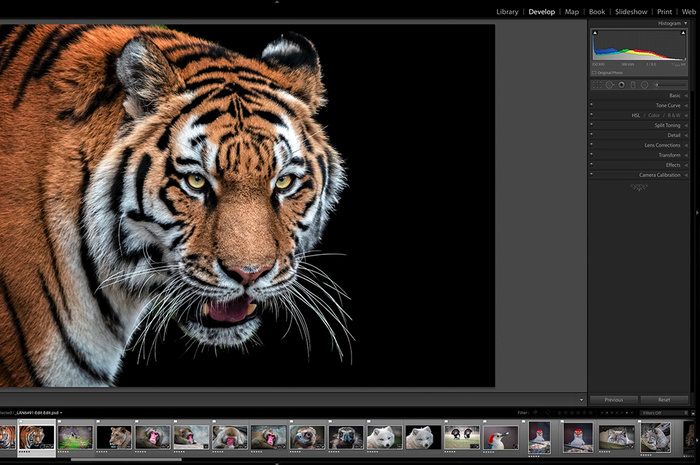 Optimize Lightroom to Run More Efficiently With These Seven Tips