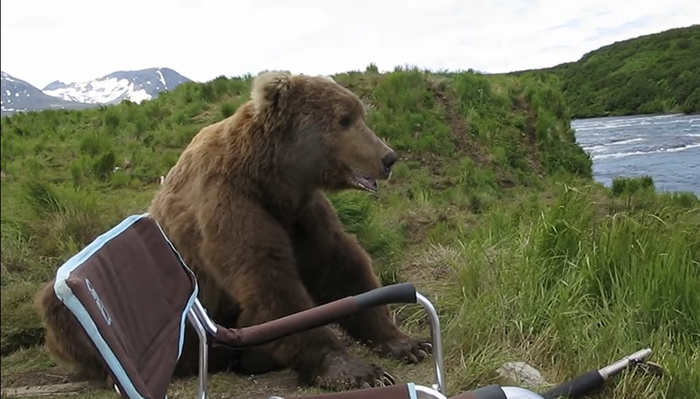 See the Terrifying But Also Cute Moment When a Bear Sits Down Next to a Photographer