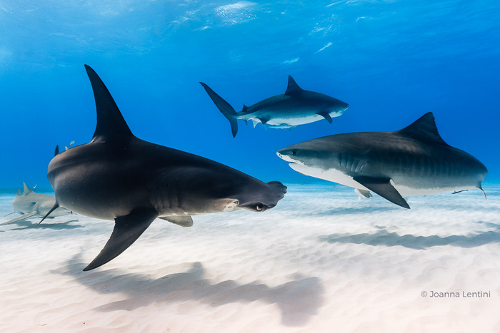 Five Tips for Underwater Wide-Angle Composition