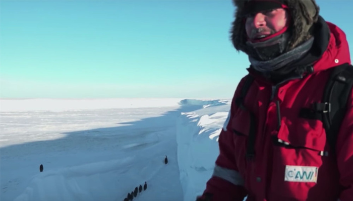 Filmmakers Criticised For Intervening with Trapped Penguins in Antarctica