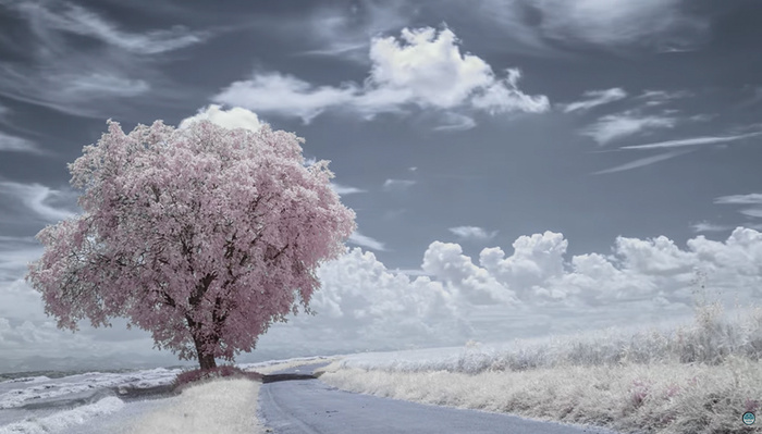 Check Out This Fantastic 8K Infrared Time-Lapse