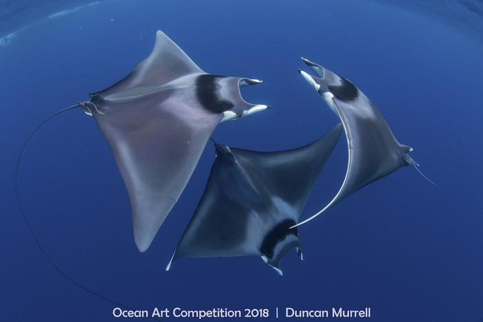 Ocean Art Competition Winners Highlight the Beauty of Our Oceans