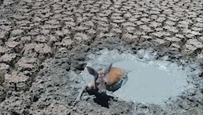 Photographer Reignites Debate of Morals in Documentary Photography With Footage of Animals Stuck in Mud