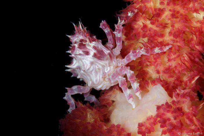 The Economic Value of Underwater Macro Photography