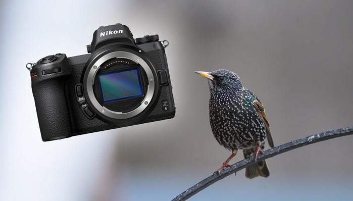 Using the New Nikon Z 6 Mirrorless Camera for Bird Photography