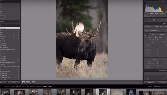 Utilize Lightroom to Add Mood to Your Wildlife Photographs