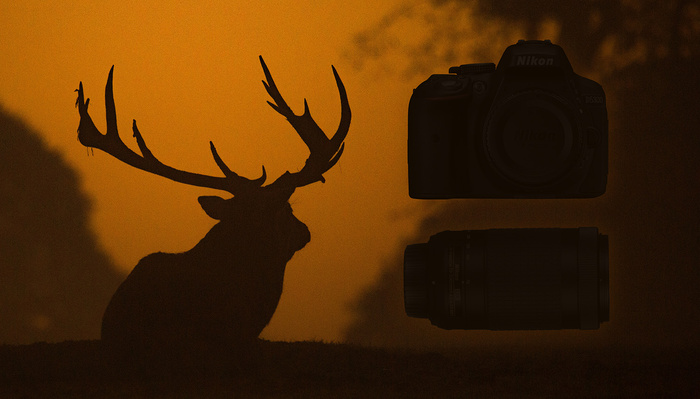 Wildlife Photography Camera and Lens Buyer's Guide: Under $500