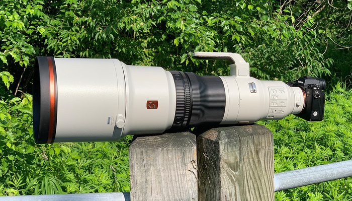 Sony FE 600mm f/4 GM OSS First Impressions From a Bird Photographer