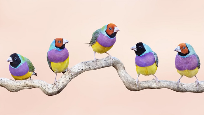 How to Photograph Birds With Clean, Simple Backgrounds