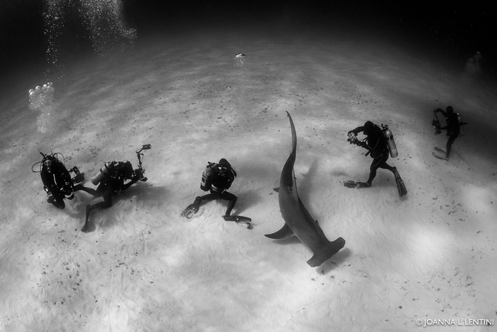 Four Reasons Why Underwater Photographers Should Travel Together