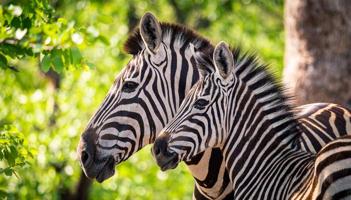 Four Ways to Compose Wildlife Images for Maximum Impact