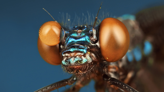 Introducing the Incredible New Fstoppers Macro Tutorial