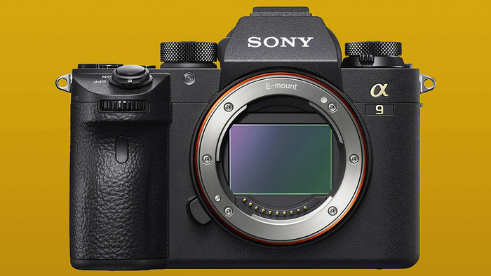 Sony Camera Settings for Bird Photography