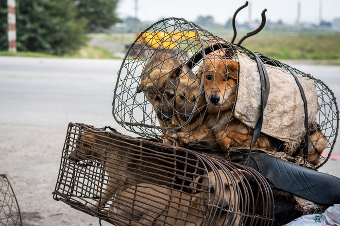 Photojournalist's Work Shines a Light on the Suffering and Abuse of Animals Around the World