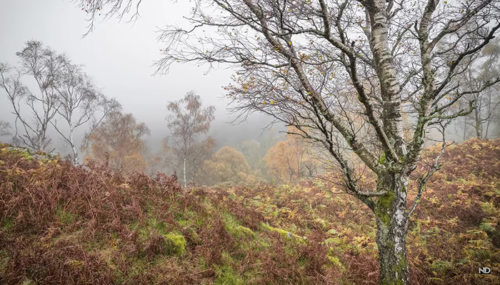 Using Fog and Autumn Leaves to Create Stunning Landscape Photos