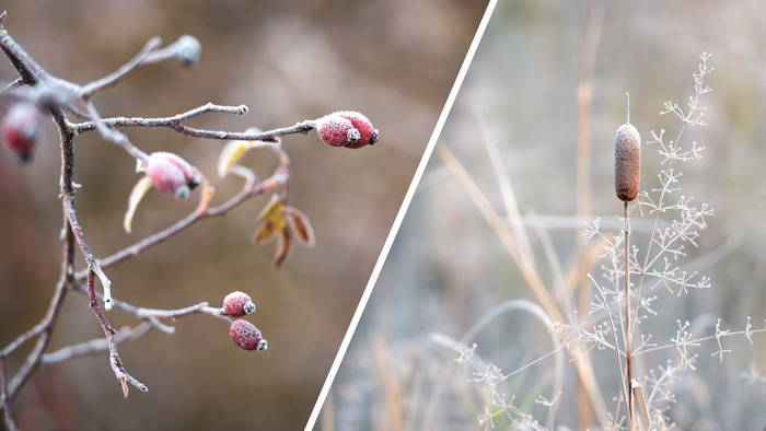 A Beginner's Guide to Capturing Winter Nature Photos