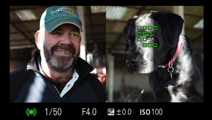 The Power of Sony's Subject Detection Can Tell the Difference Between Human and Animal Eyes