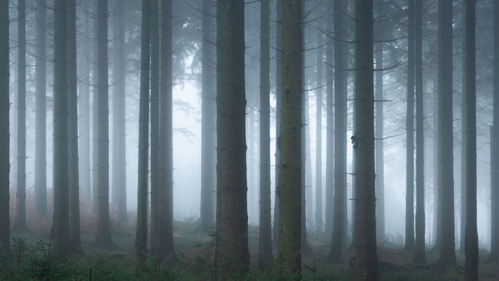 You Need More Than Perfect Conditions for Successful Forest Photography
