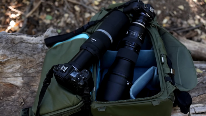 Which Camera is the Best for Wildlife Photography Out of The Canon R5 or R6?
