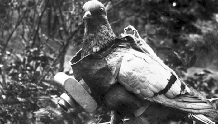 The CIA Attached Cameras To Pigeons To Spy On Enemies During the Cold War