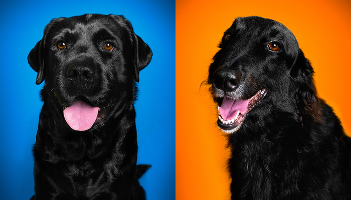 How to Create Awesome Pet Photos at Home