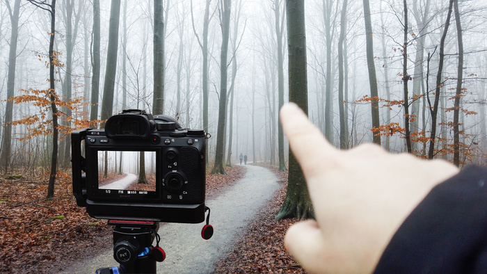 My Golden Rule of Forest Photography (Not Fog)