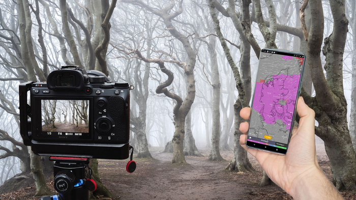 How to Predict the Most Important Factor for Incredible Forest Photography