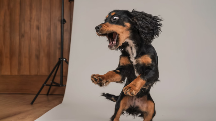 How To Photograph Action in Studio
