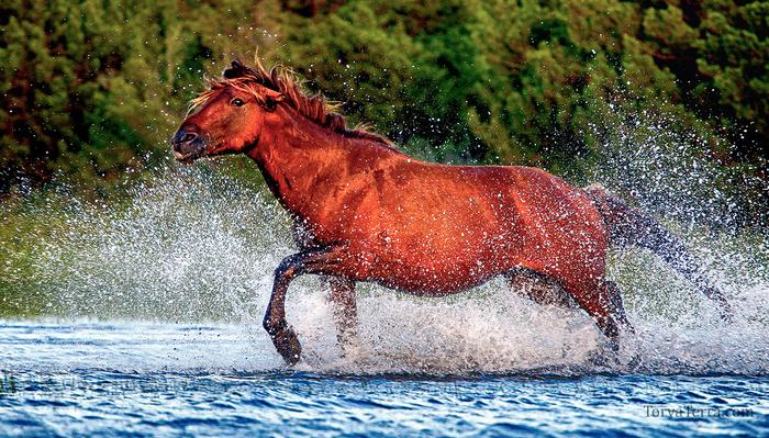5 Tips for Better Wildlife Photographs