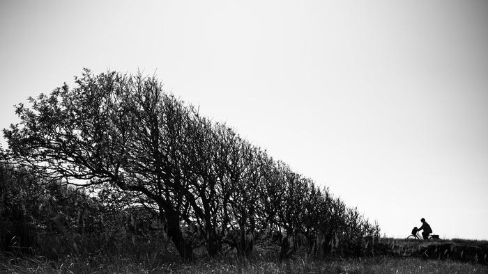 Cyclist and coast trees