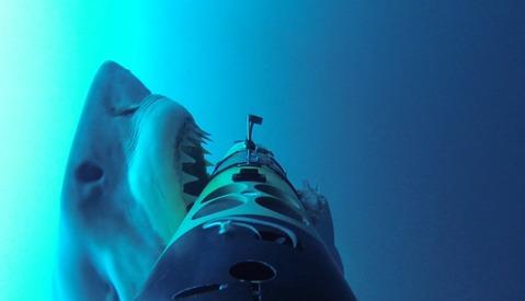 Watch This Startling Shark Attack and Appreciate All That Cameras Do