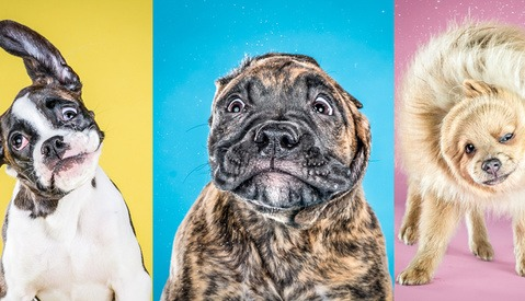 "Prepare For an Onslaught of Cute: Carli Davidson's ""Shake"" Series is Back... with Puppies!"